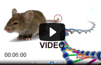 Mouse Direct PCR Kit (For Genotyping)